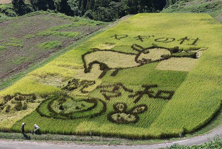 ヤギの姿などが浮かび上がる稲作アート