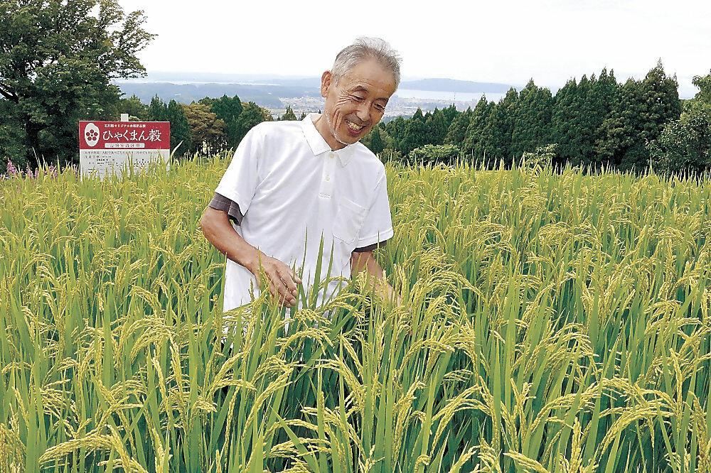 稲の生育を確認する石井さん=七尾市八田町