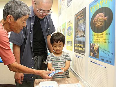 富山湾の顔選ぼう 魚津水族館、マイナー10種総選挙