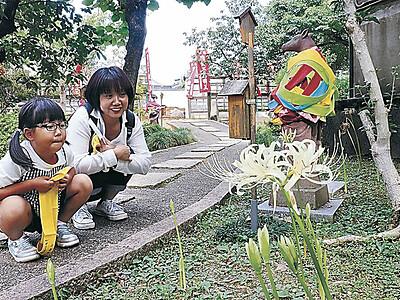 愛らしい白のヒガンバナ 金沢市野町の香林寺 例年より遅れ咲き始め