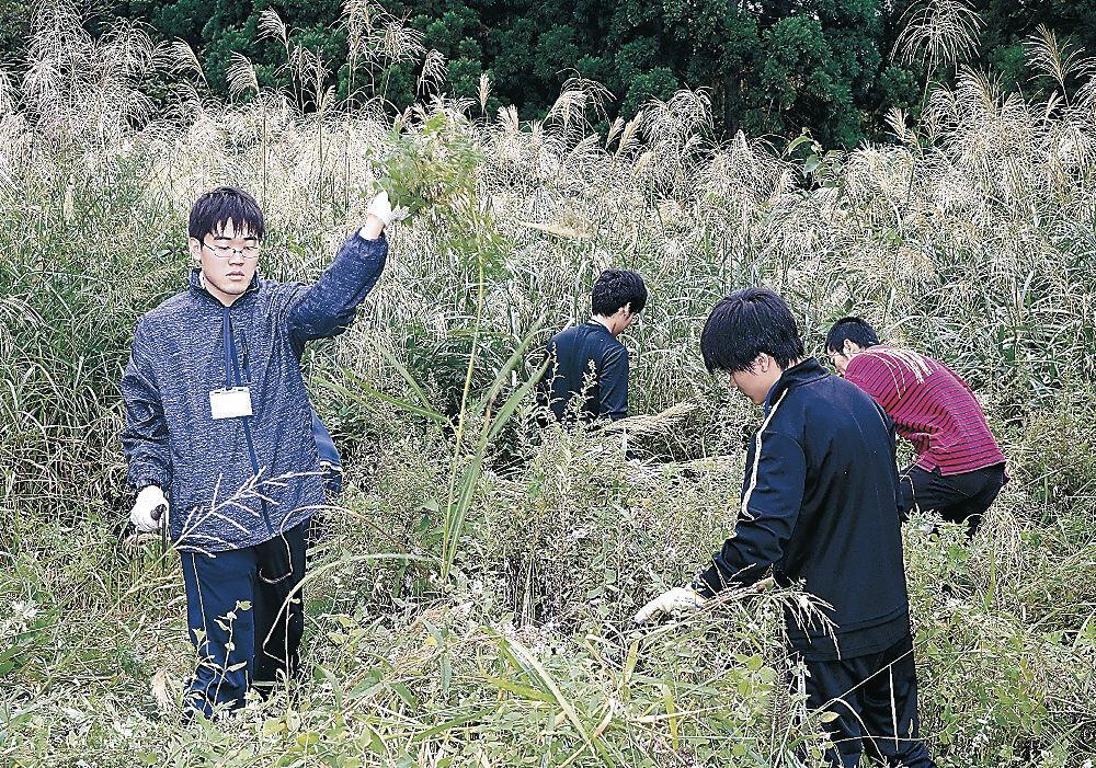 荒廃したハーブ畑で下草刈りに励む学生=白山市女原
