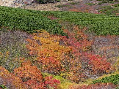 秋色のお山、天からも見えますか 御嶽山8合目付近