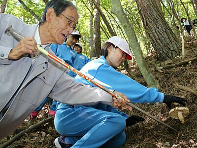 地元の山林でマツタケ狩り 上田・武石小児童