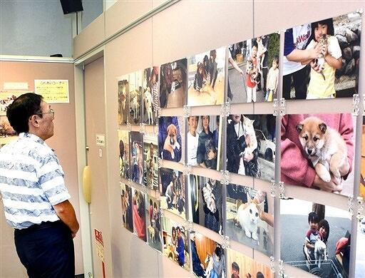 犬猫との共生を写真などで伝えるパネル展=10月15日、福井県敦賀市本町2丁目のげんでんふれあいギャラリー