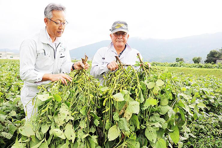 黒大豆の出来を確認する組合員