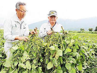 特産黒大豆味わって 19、20日に収穫大会