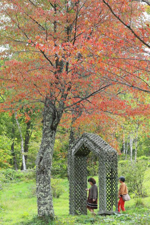 紅葉した赤と緑のコントラストが映える治部坂高原=16日、阿智村浪合