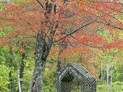 濃淡鮮やか、紅葉始まる 阿智・治部坂高原