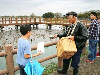 冬の使者呼ぶ掛け声 白鳥おじさん餌付け 阿賀野・瓢湖