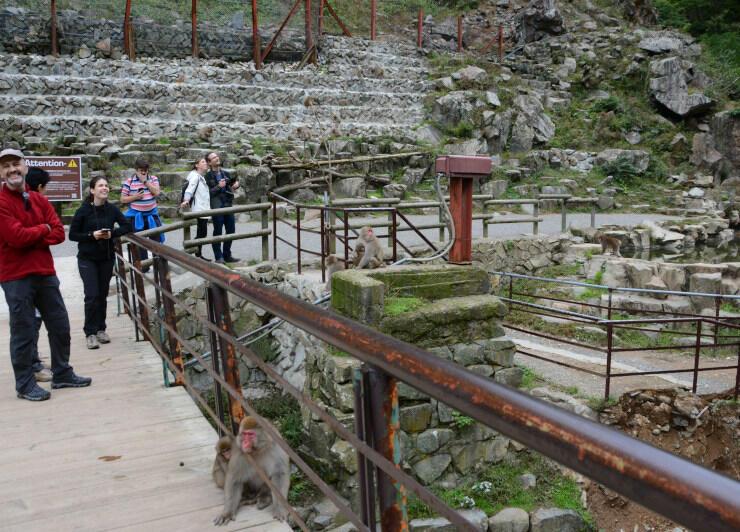外国人観光客も多い地獄谷野猿公苑。猿が漬かる温泉(右端)に注ぐパイプが壊れ、復旧を急ぐ=18日