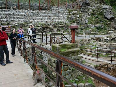 猿の温泉、復旧へ急ピッチ 長野県内観光施設も台風被害