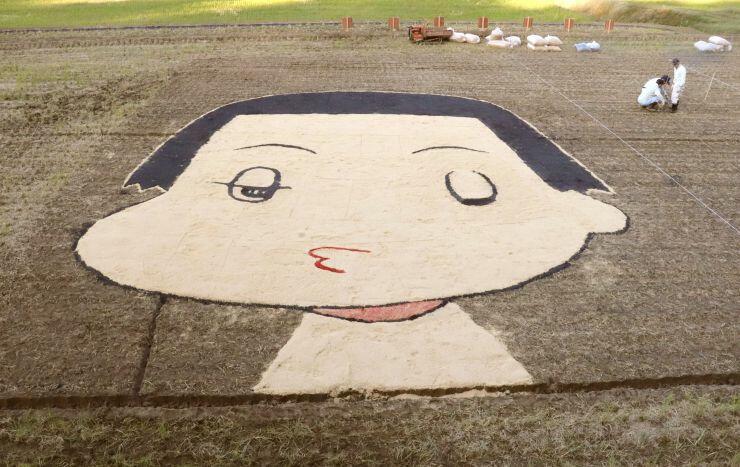 田んぼにもみ殻で「チコちゃん」を描いたアート作品=柏崎市西山町大津