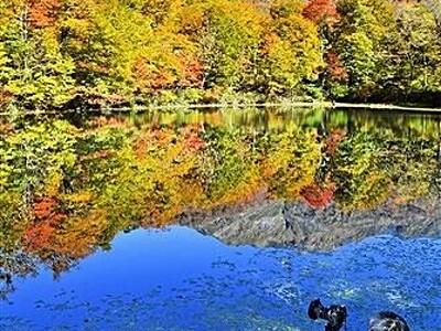 福井・大野の刈込池、紅葉が見頃 岸辺が秋色に
