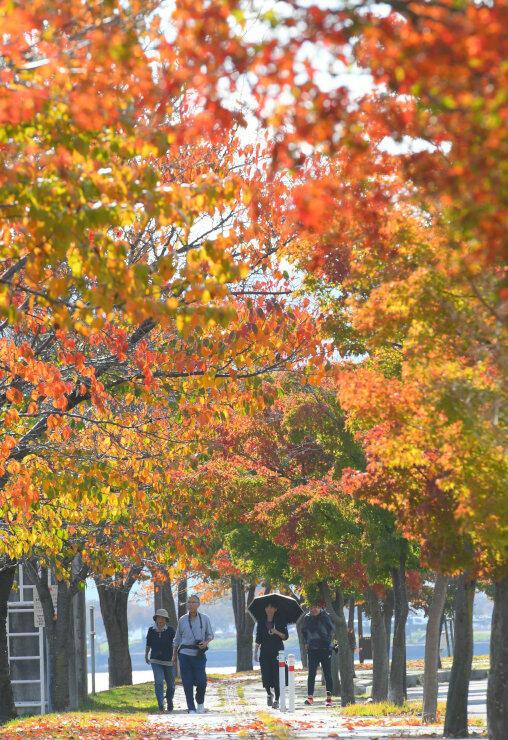 桜やモミジの葉が色づいて秋の装いとなった諏訪湖畔
