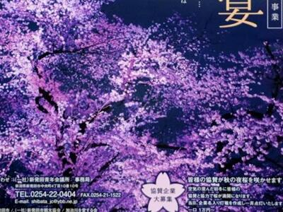 季節外れの夜桜 9~16日 記念公園で電飾点灯 新発田
