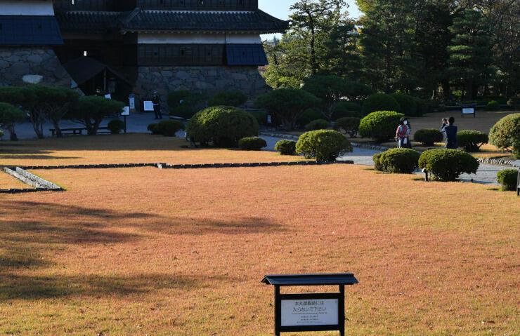 赤くなった松本城本丸庭園の芝生=31日午後、松本市