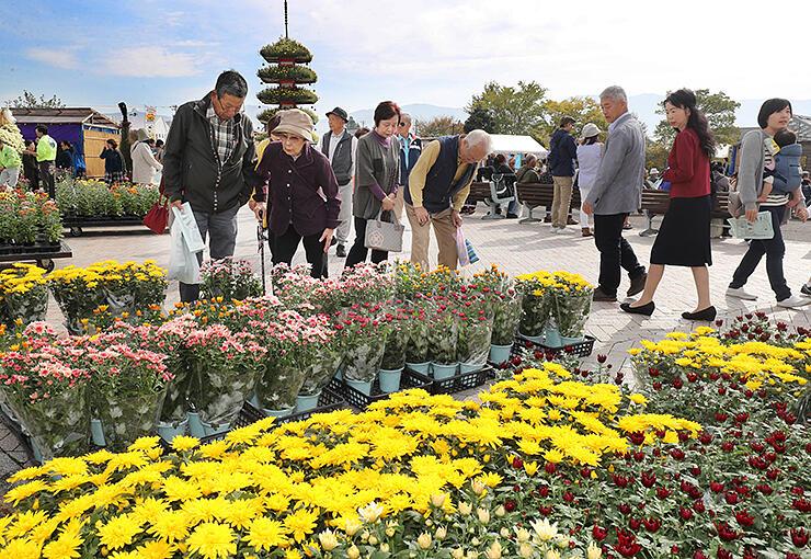 南砺菊まつりが開幕し、色とりどりの菊を眺める来場者=南砺市園芸植物園