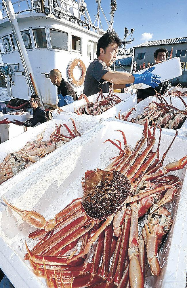 カニが詰まった箱を次々と陸に揚げる漁業者=加賀市の橋立漁港