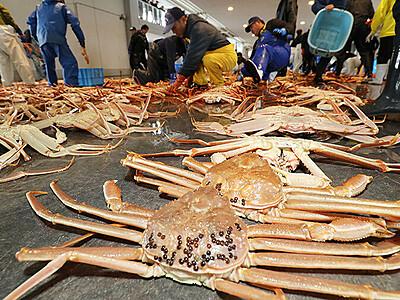 ズワイガニ漁解禁 新湊漁港で初競り