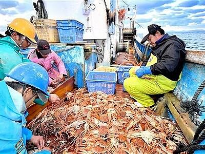 越前がに漁解禁、続々水揚げ初値5万円 福井県の冬の味覚