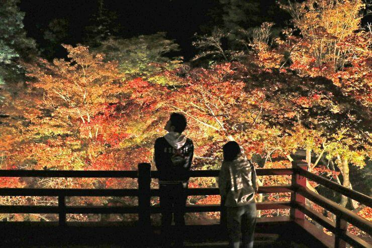 ライトアップで浮かび上がる弥彦公園のもみじ谷=6日、弥彦村