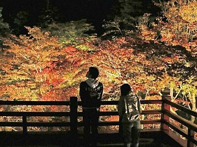 夜空を染める秋色 弥彦公園もみじ谷