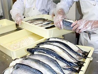「鯖の熟れ鮨し」仕込み始まる 福井県勝山市