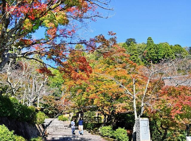 秋晴れの青と対比して映える紅葉=11月7日、福井県越前市の花筐公園