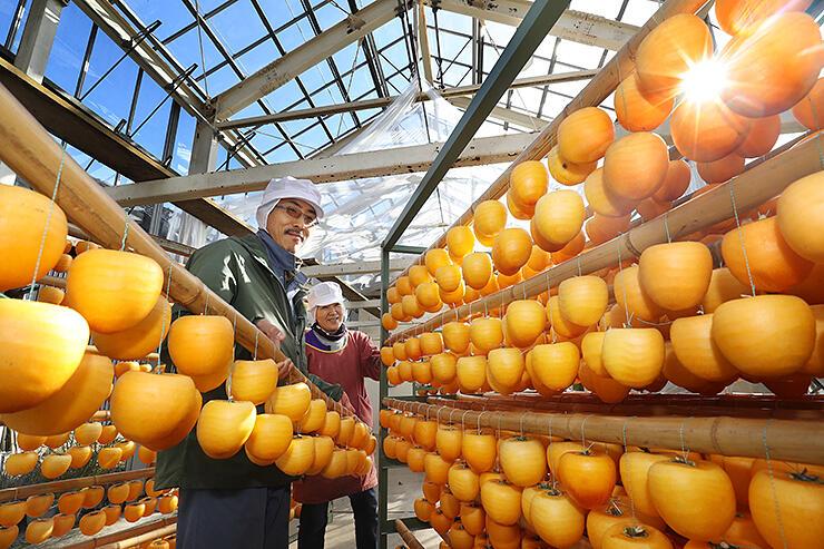 陽光が差し込む乾燥棟で作られる干し柿=南砺市土生新