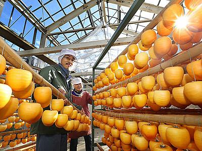 干し柿のカーテン 福光、生産最盛期