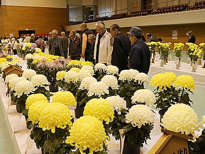 丹精込めた1100点 南砺で全日本菊花連盟大会
