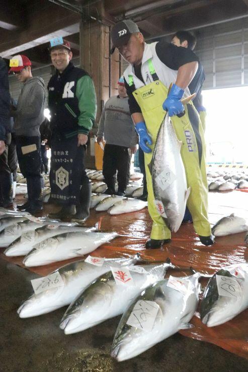 今季一番の大漁となった寒ブリ=11日、佐渡市春日