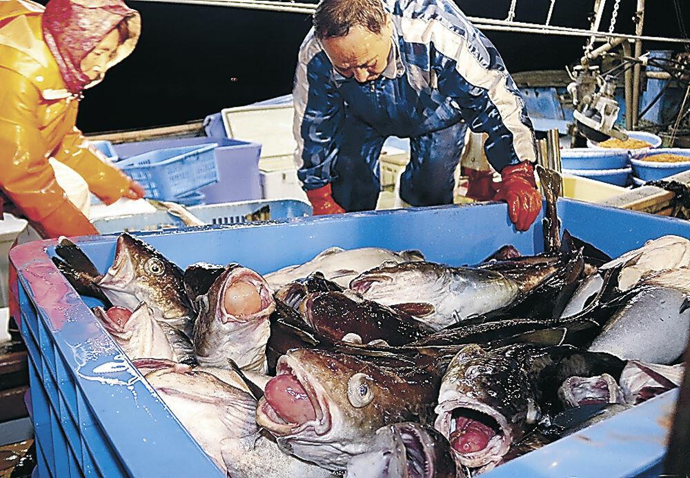 初物のタラを水揚げする漁師=輪島港