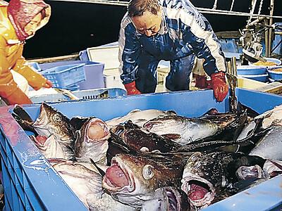 輪島のタラ漁解禁 初日水揚げは昨年の半分程度