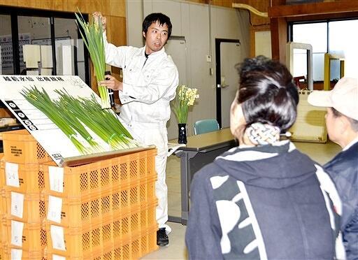 越前水仙の出荷規格を説明するJA職員=11月11日、福井県越前町左右のJA越前丹生すいせん研修館