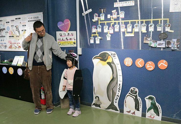 職員が手作りしたぬいぐるみや変装グッズが並ぶペンギンの解説コーナー=長岡市寺泊水族博物館