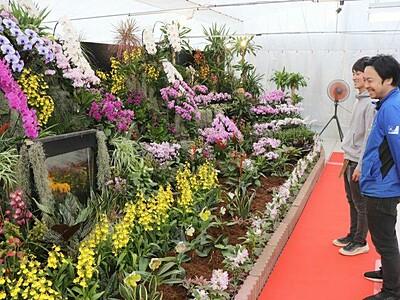 洋ラン150種 美を競う 新潟・西蒲の園芸店で展覧会