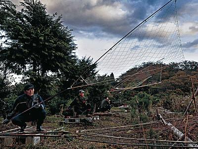 伝統の坂網猟 加賀市で解禁、マガモ狙う
