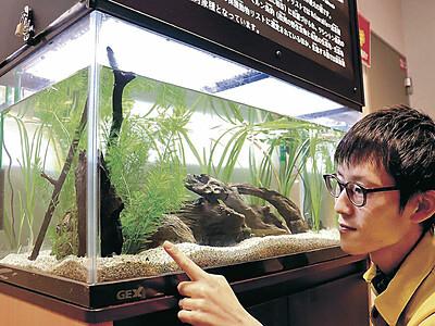 白山の県昆虫館 欧州の絶滅危急種国内初展示