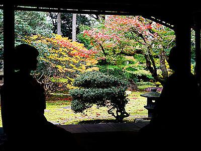 紅葉の庭園、静かな時間