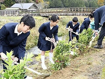 朝倉氏遺跡 日本遺産記念し、一乗小児童が植樹