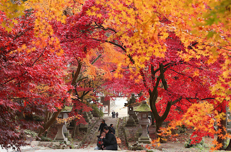 参道を鮮やかに彩るカエデ=22日、長野市の清水寺
