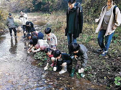金沢・湯涌温泉 ホタルの里へ幼虫を放流