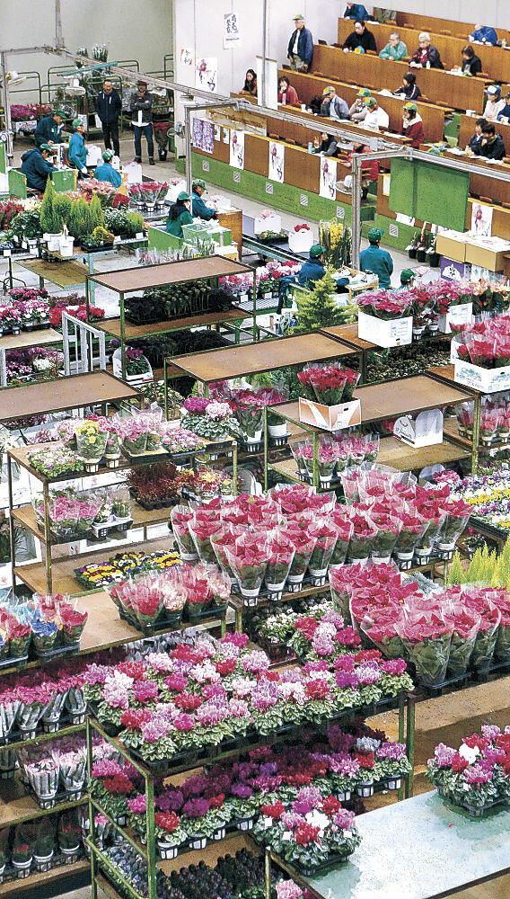 競りにかけられた色鮮やかな鉢物=市公設花き地方卸売市場