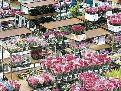 Xマスへ大市 金沢の花き市場 に4万2千鉢