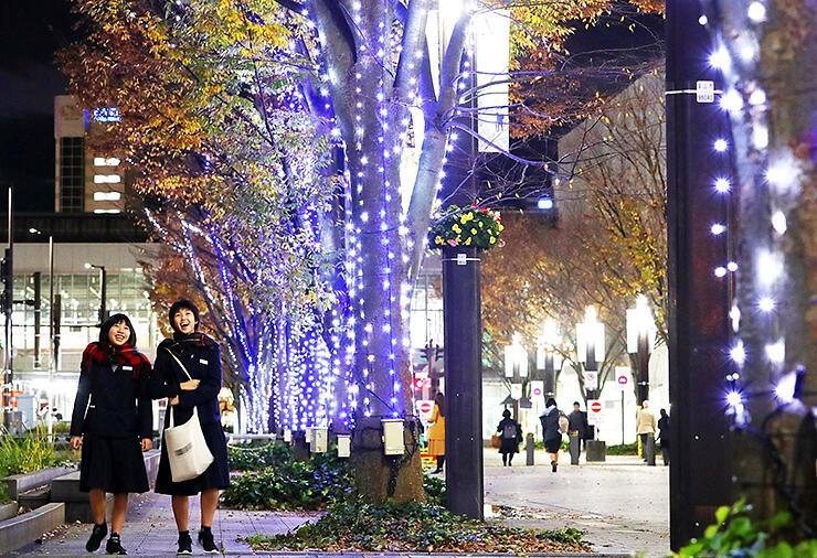 街路樹を華やかに彩る富山駅北地区のイルミネーション