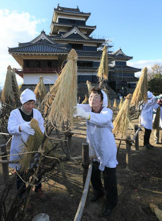 木々に「わらぼっち」をかぶせる松本古城会の女性たち=1日、松本城本丸庭園