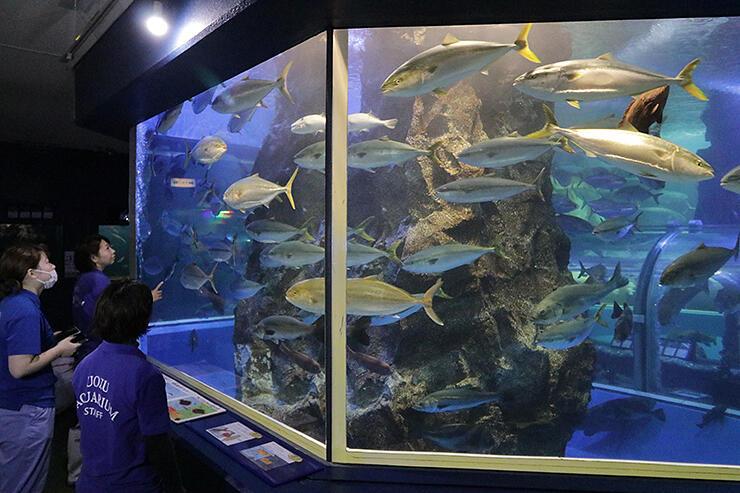 ブリやカンパチなど搬入した魚の状態を確認する職員