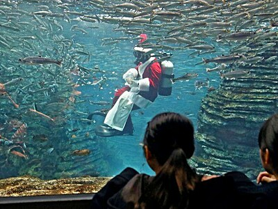 サンタ、魚にプレゼント ダイバー餌やり 上越うみがたり