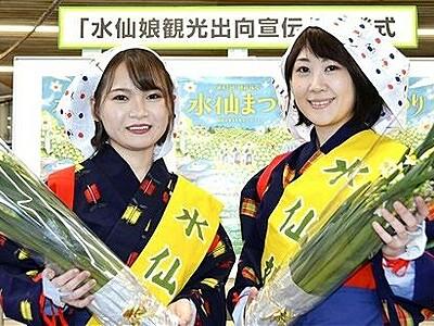 水仙娘、今年で45代目 福井県、水仙まつりの華